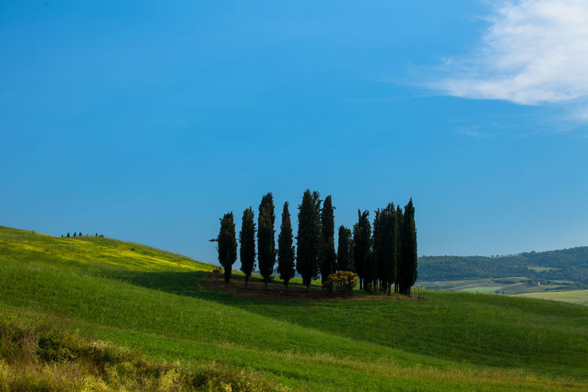 Val D'Orcia, Tuscany, Italy. Travelling through the countryside. Beauty In Nature Countryside Field Hills Hillside Italia Italy Landscape Nature Nature_collection No People Non-urban Scene Solitude Tranquil Scene Travel Travel Destinations Tree Trees Tuscany