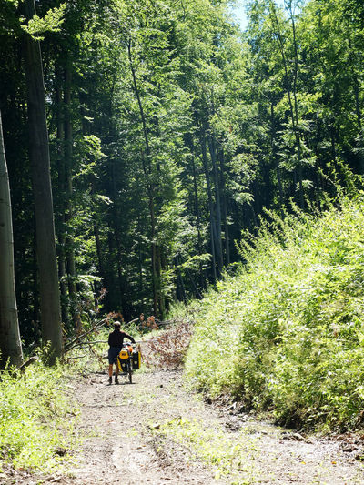 Bike Trip Adventure Backpack Beauty In Nature Beauty In Nature Bike Packing Bike Touring Day Footpath Forest Full Length Growth Healthy Lifestyle Hiking Men Mountain Nature One Person Outdoors People Real People Rear View Road The Way Forward Tree