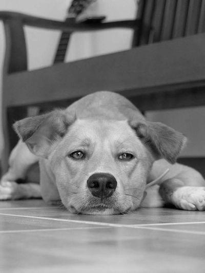 Portrait of dog lying down