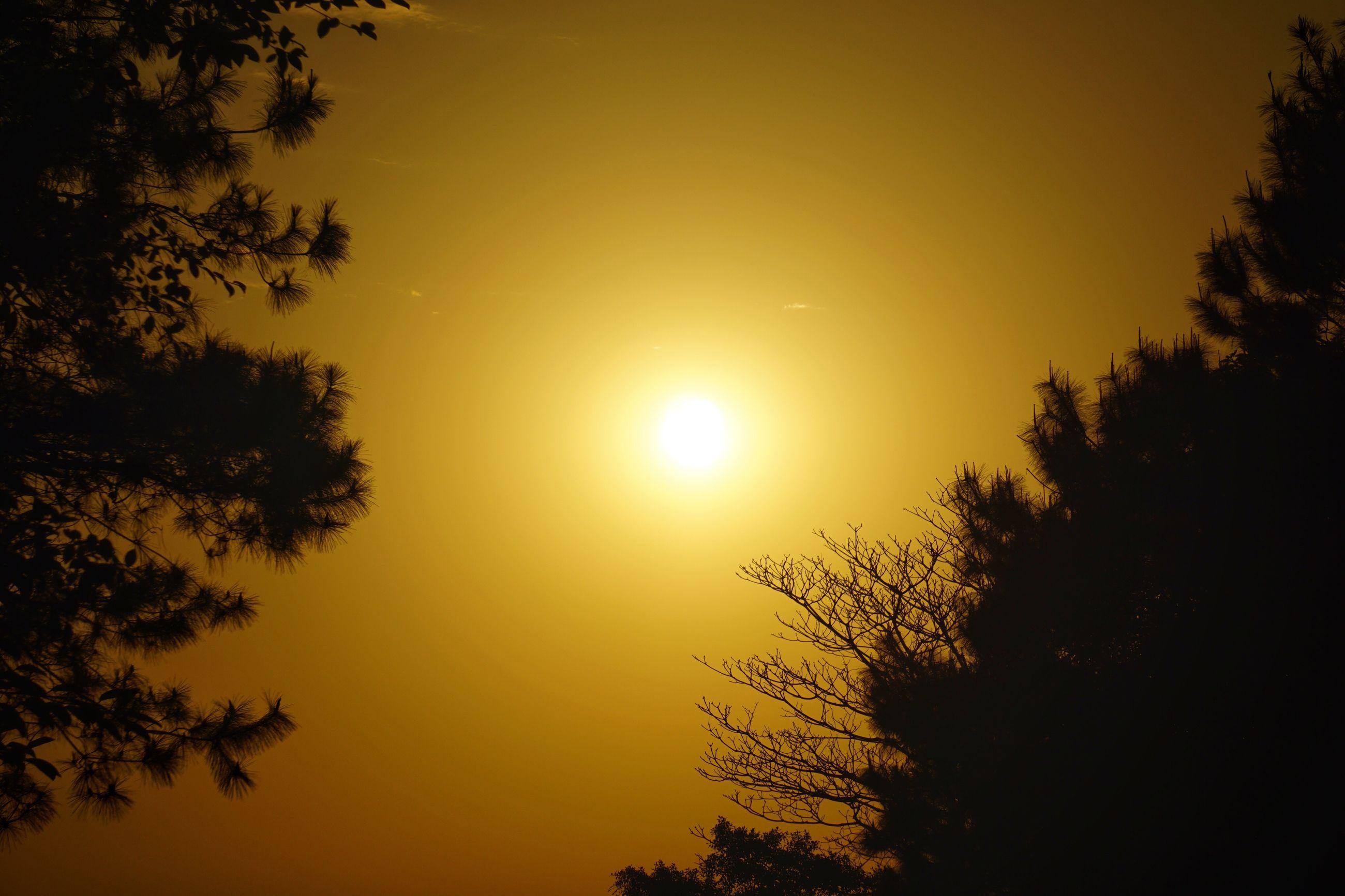 sunset, silhouette, tree, sun, tranquility, beauty in nature, tranquil scene, scenics, nature, sky, idyllic, orange color, growth, outdoors, no people, outline, non-urban scene, majestic, dark, sunbeam