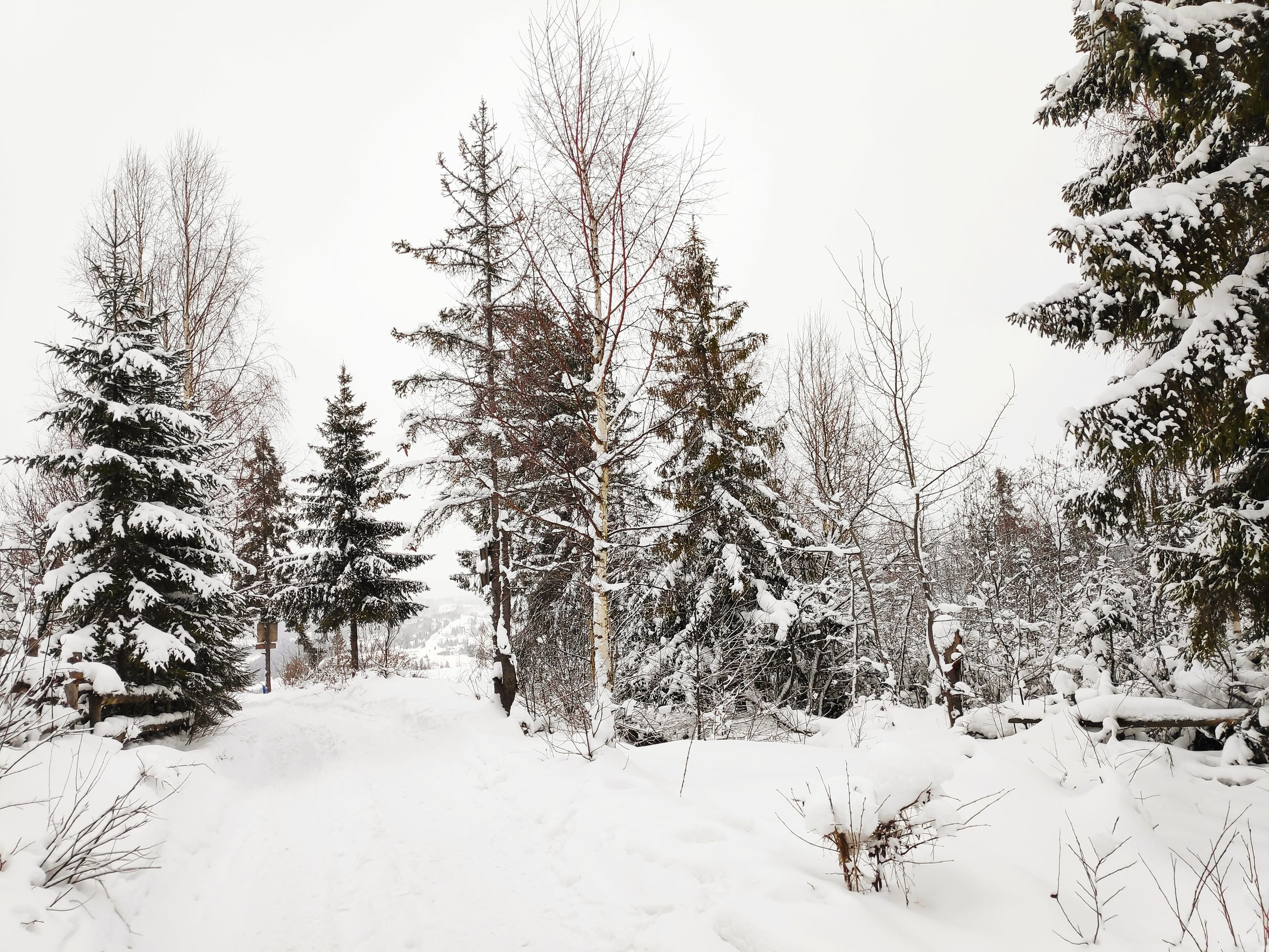 snow, winter, cold temperature, tree, plant, beauty in nature, tranquility, land, sky, nature, covering, tranquil scene, scenics - nature, white color, no people, field, day, non-urban scene, growth, snowing