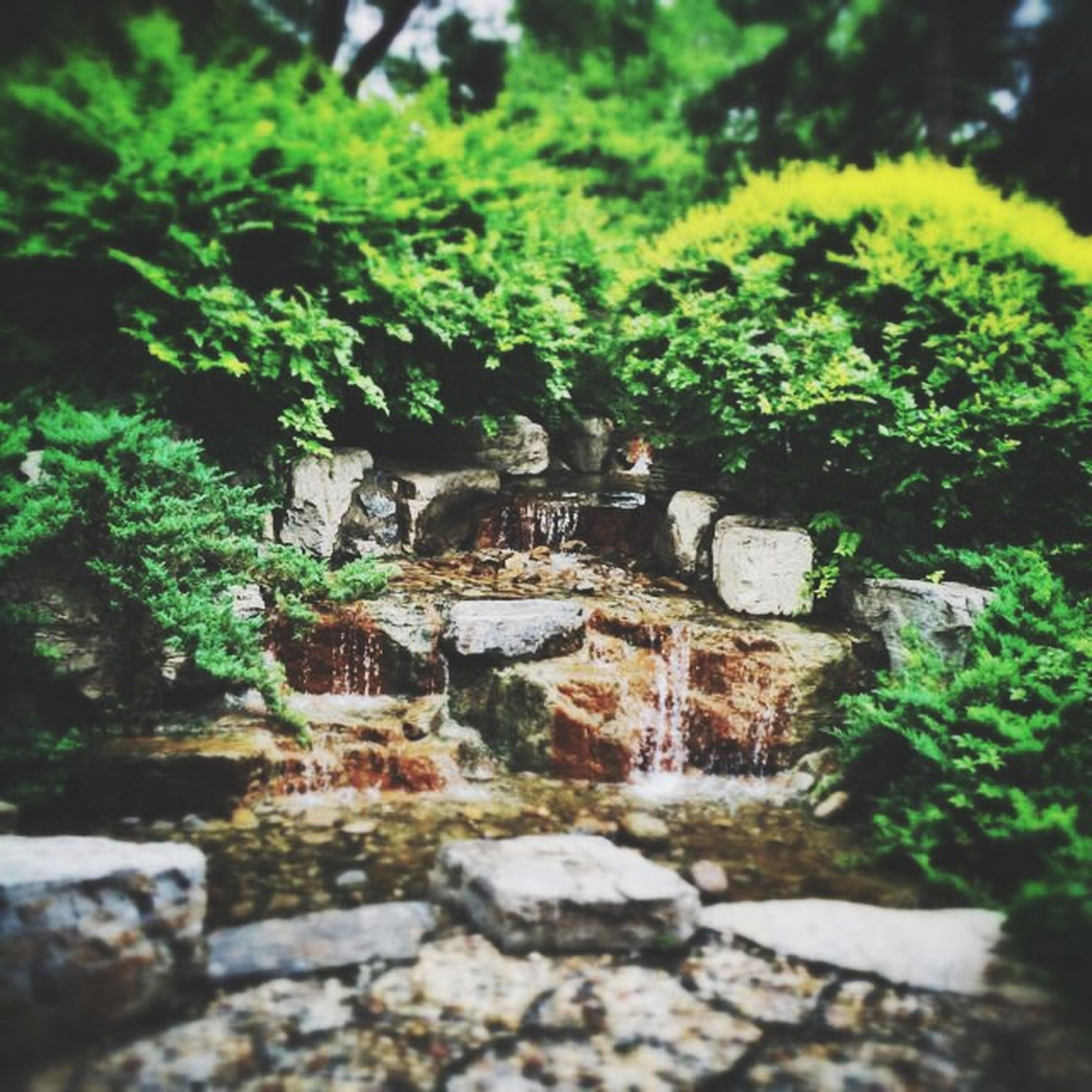 growth, plant, tree, rock - object, green color, moss, nature, selective focus, leaf, forest, outdoors, no people, day, beauty in nature, tranquility, stone - object, stream, rock, growing, water