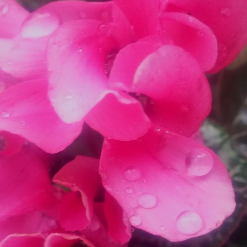 Pink Color Freshness Nature Close-up Beauty In Nature No People Growth Outdoors Day Flower Water Winter Rain Fragility