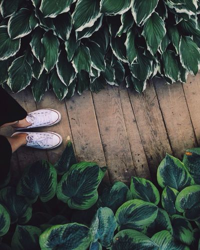 Low Section Of Woman Wearing Canvas Shoes Standing On Boardwalk Amidst Plants