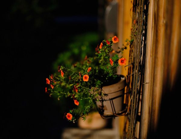 Flower Flowering Plant Plant Freshness Growth Fragility Vulnerability  Beauty In Nature Close-up Focus On Foreground Flower Head Flower Pot Potted Plant