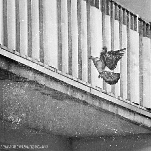 Jastrzębie - Zdrój Street View B&w Photography