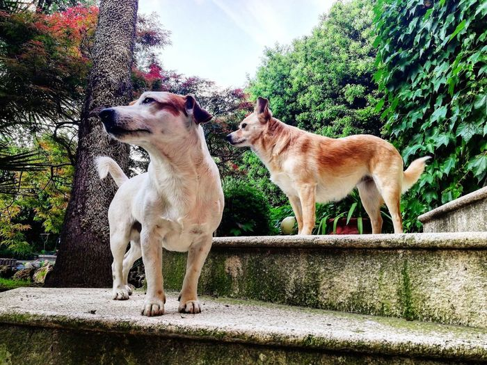 View of two dogs against the wall