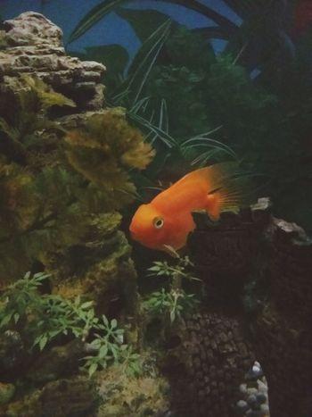 холода..выжили только 2 рыбки...... First Eyeem Photo