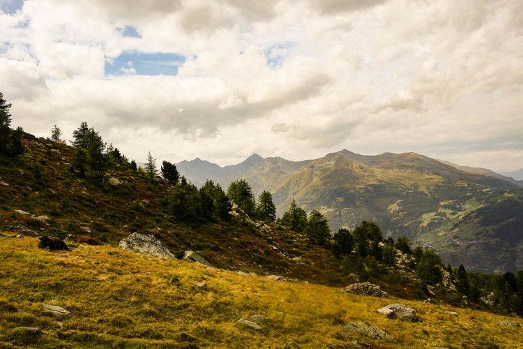 Alpen Berge Cloudy Schweiz Visp Beauty In Nature Bewölkt Cow Day Forrest Hochalm Kühe Landscape Mountain Mountain Range Nature No People Outdoors Range Scenery Sky Switzerland Wald First Eyeem Photo