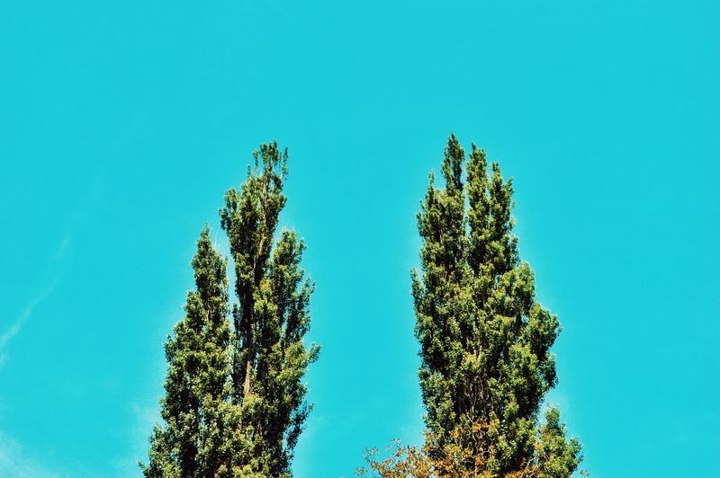 Double Tree Double Trees And Sky Pastel Pastel Colors Pastel Sky Colored Background Nature Outdoors Beauty In Nature Color Palette Green Color Simplicity Minimal Minimalobsession Atmospheric Mood