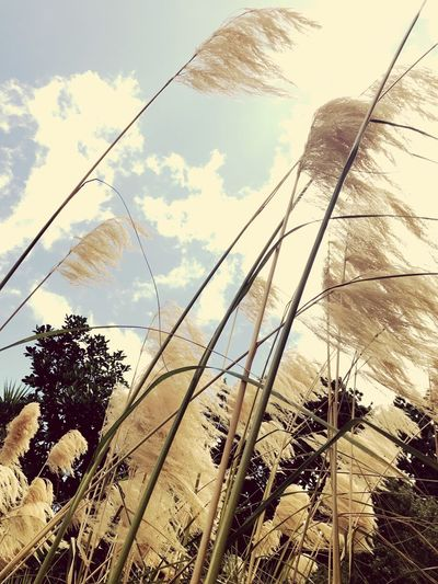 Sunshine ☀ IPhoneography Grass Sky Cloud - Sky Nature Day No People Low Angle View Outdoors