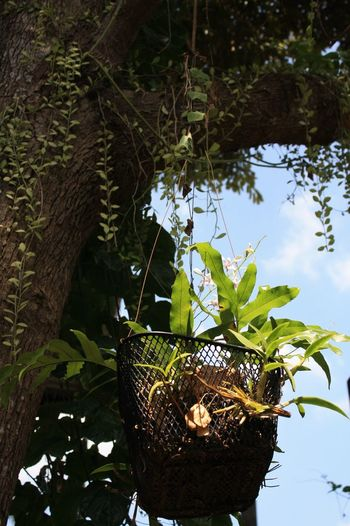 Beauty In Nature Tree Orchids Growth Forest Canon😉 Phuket Thailand🇹🇭