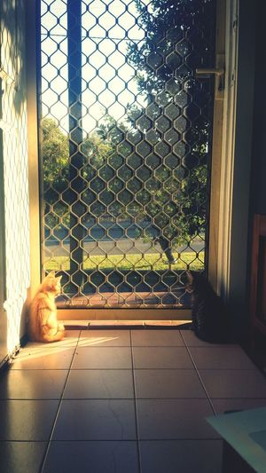 Just watching the day go by Catlovers Catsofinstagram Catoftheday Kittens Animal_collection Animal Photography Animallovers Animals Love EyeEm Best Shots