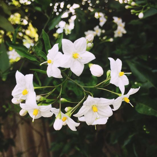 Pretty little flower's 🌸🍃🌸🍃🌸 WhileIwaswalking Nature Flowers Flower Littleflower Plants Summer Sidewalkflower 🌸🍃🌸🍃🌸