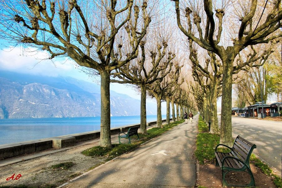 Road Tree Tranquility Water Lake Day Paysage Francetourisme Art Photography Beauty In Nature Art Paradise Love Life Color Explosion Sun Tranquility Autumn Sunlight First Eyeem Photo Autumn🍁🍁🍁 Taking Photos Colour Of Life Landscape Mountain