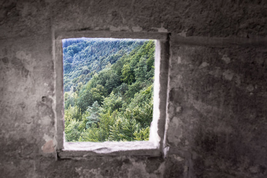 Festung Königstein Architecture Built Structure Day Nature No People Stronghold Tree Window Woods