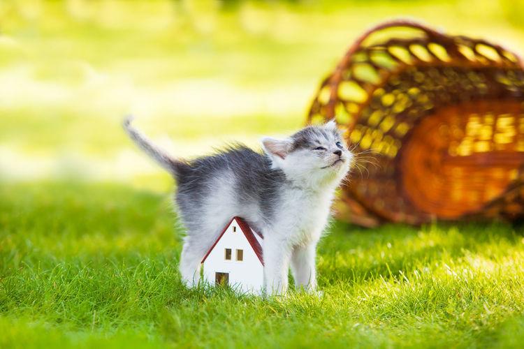 Cat looking away in a field