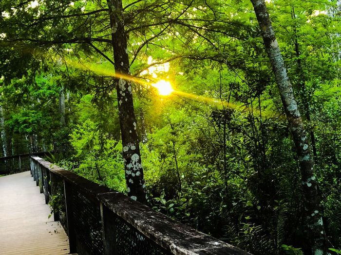 Sun peeking in Plant Tree Sunlight Growth Sun Nature Beauty In Nature Lens Flare Scenics - Nature Outdoors Non-urban Scene No People Sunbeam Land Day Tranquil Scene Tranquility Green Color Streaming Water