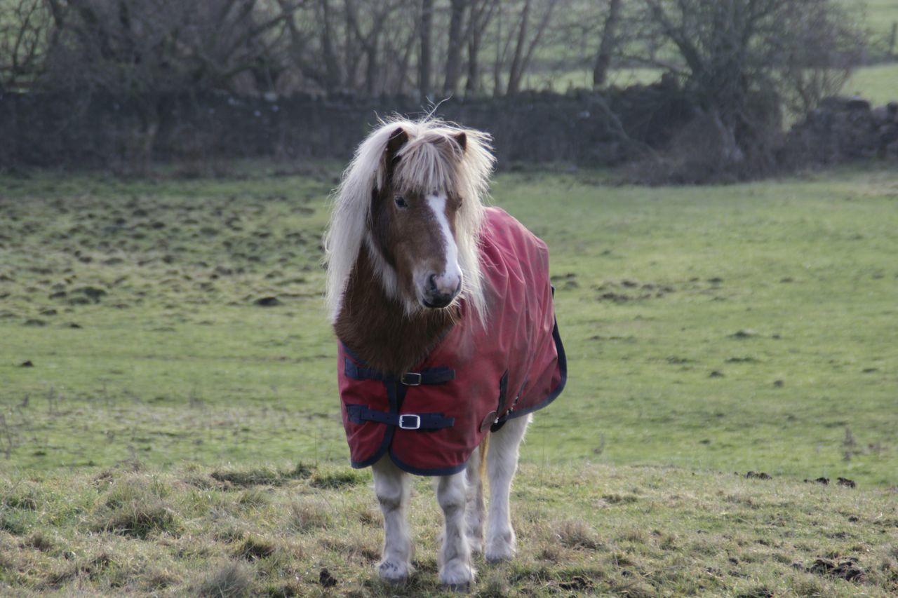 Pony Horse In Pasture