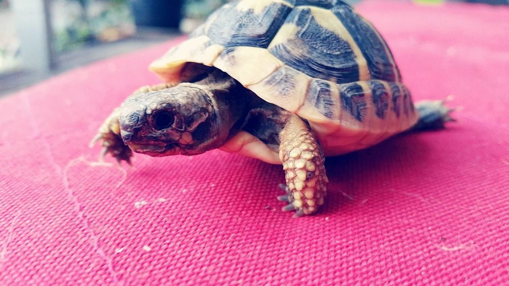 Tortle baby