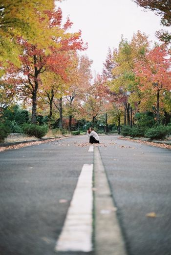 View of cat on road amidst trees during autumn