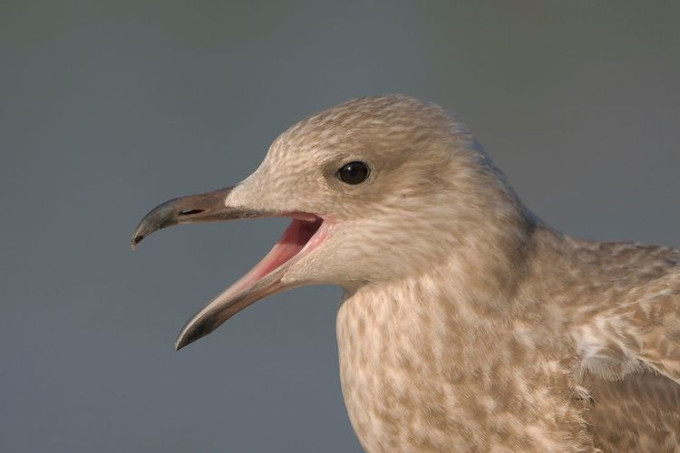 Young seagull EyeEm Nature Lover Gulls Bird Photography EyeEm Birds