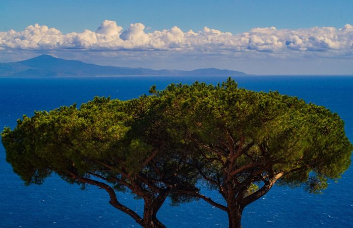 Perspectives On Nature Sky Blue Water Nature Scenics Tree Beauty In Nature Sea No People Tranquility Outdoors Tranquil Scene Day Cloud - Sky Mountain