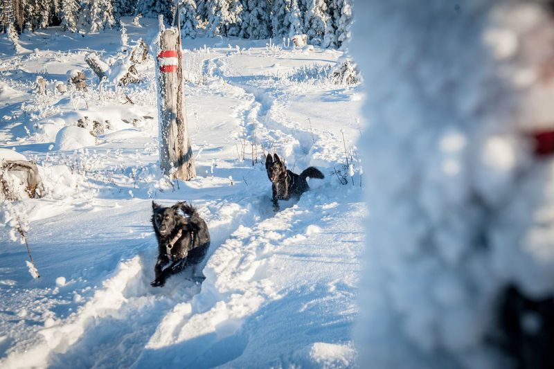 Fun in the snow with my two dogs Snow Cold Temperature Winter Animal Themes Animal Mammal Group Of Animals Day Nature Animals In The Wild No People Canine Dog Domestic Animals Land Vertebrate Pets Beauty In Nature Outdoors