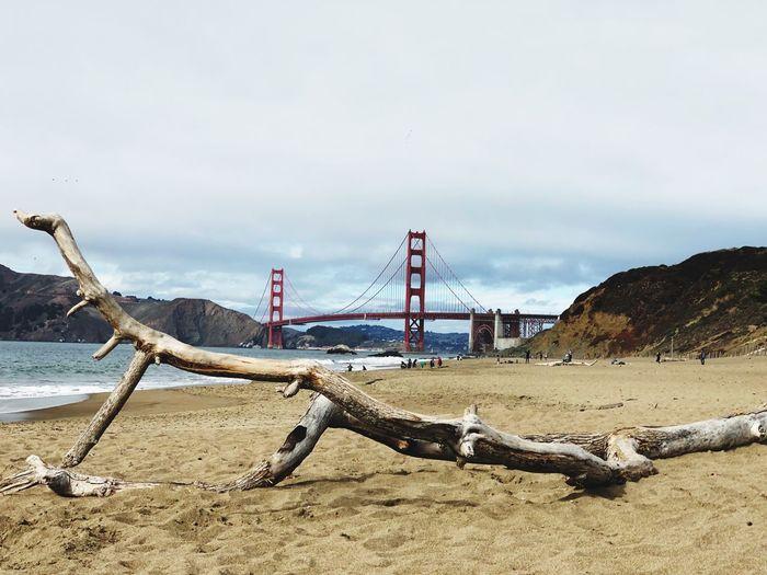 Driftwood at beach against golden gate bridge and sky