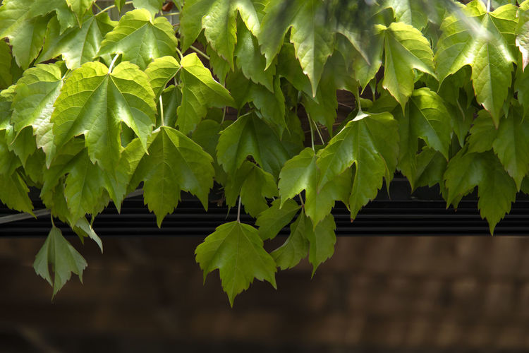 Low Angle View Of Leaves On Tree By Building
