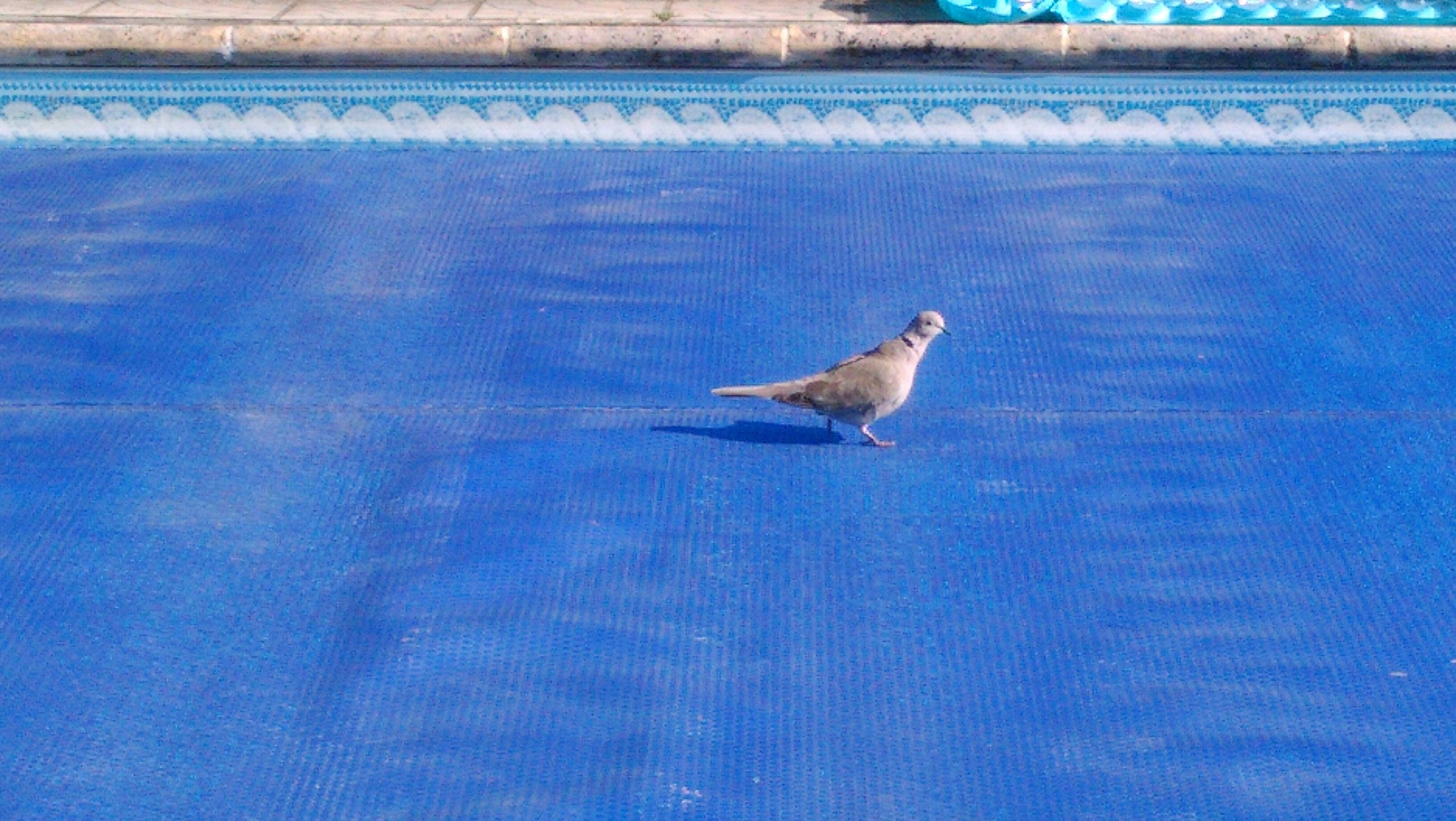 blue, one animal, animal themes, bird, wildlife, animals in the wild, seagull, flying, water, nature, spread wings, day, sea, full length, no people, outdoors, zoology, beauty in nature, high angle view, sunlight