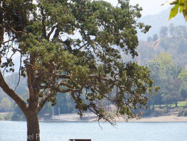 Tree Trees Lake Lake View Nature