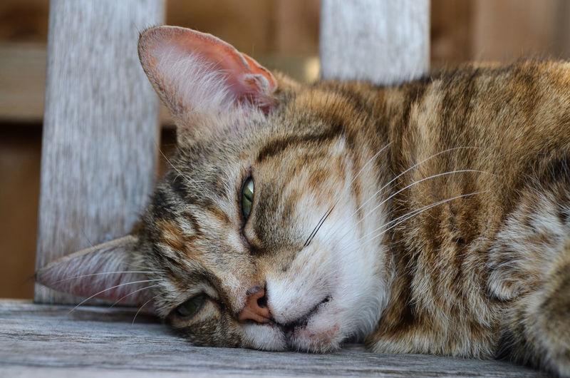 Animal Themes Cat Cats Cats Of EyeEm Close-up Day Domestic Animals Domestic Cat Feline Mammal No People One Animal Pets Whisker Sleeping sleep