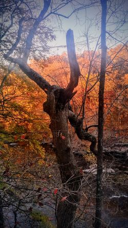 Looks like a reflection but just a tree in the woods lol Sunset Tree No People Sky Outdoors Nature Day Tricky Pic Nature Beauty In Nature Close-up Sunlight Reflection Lights And Shadows