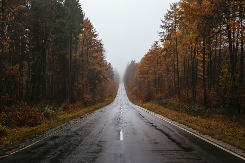 Autumn Autumn Colors Fall Fall Beauty Fall Colors Foggy Foggy Day Foggy Landscape Foggy Weather Forest Hazy  Moody Nature On The Road Outdoors Road The Way Forward Trees Tunnel Tunnel Vision