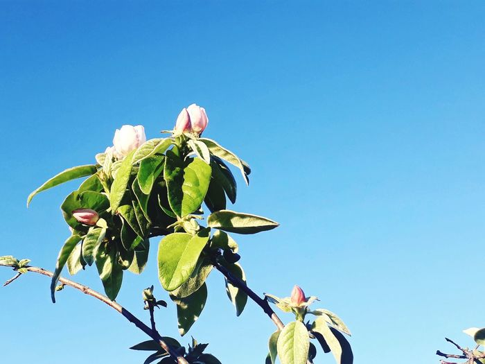 Flower Perching Blue Leaf Insect Butterfly - Insect Sky Close-up Plant