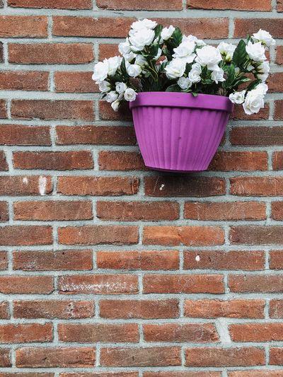 Flower Pot Stuck On Wall