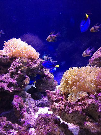 Kazakistan Zoo Almaty Underwater Sea Animals In The Wild Sea Life Water Animal Wildlife UnderSea Nature Coral Fish