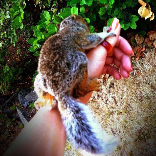 Nature Squirrel Ig Igers iphone igaddict instapic instagood iphonesia instaddict instapic iphoneonly instawesome iloveanimals hipsta hipstaddict