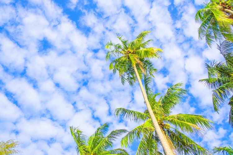 Palm trees and
