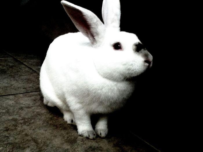 The coolest rabbit ;) Rabbit Wolfie SexyBeastRightThere
