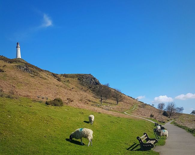 The Hoad monument, Ulverston Outdoor Photography Outdoor Life The Great Outdoors - 2016 EyeEm Awards Natureporn Nature Countryside Nature_perfection Great Outdoors Rural Scene England Cumbria Sky Cloudporn Great View Clouds And Sky Ulverston The Hoad Sheep Farm Grazing Sheep Grass Memorial Museum Sir John Barrow Walking