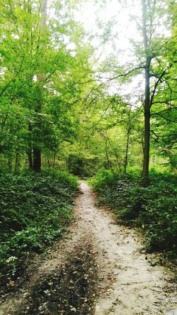 Nature Trees GREEN LIFE Running Healthy Lifestyle Lost In The Wood