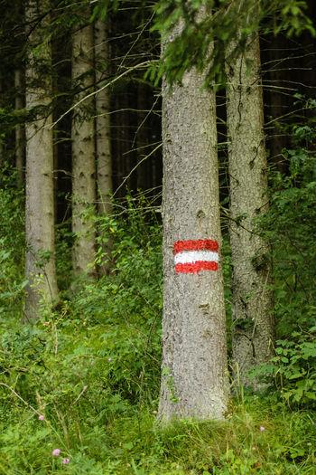 Austria Austrian Flag Butterfly Forest Green Lake Lake Tourism Wildlife Wood