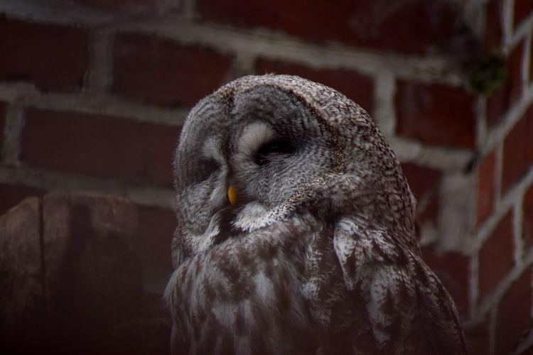 BIG Hedwig Nature Zoo Animal Animal Wildlife Bricks Close-up Mystery Owl Wildlife
