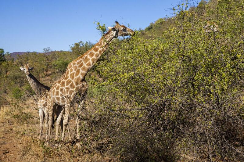 PIlanesberg Johannesburg Natue Photography Pilanesberg South Africa 🇿🇦 Wild Life