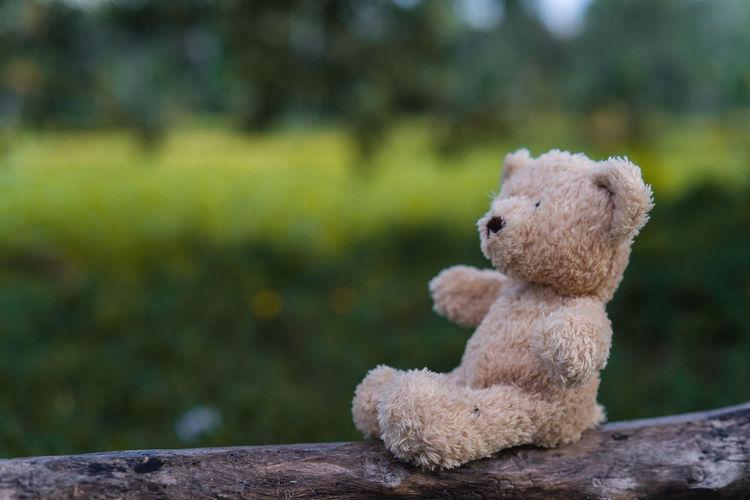 Close-Up Of Teddy Bear On Log