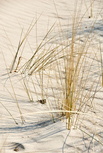 Snow Cold Temperature Winter Nature No People Day Plant Land Water Non-urban Scene Animals In The Wild Frozen Grass Animal Wildlife Animal Themes Animal Outdoors Beauty In Nature