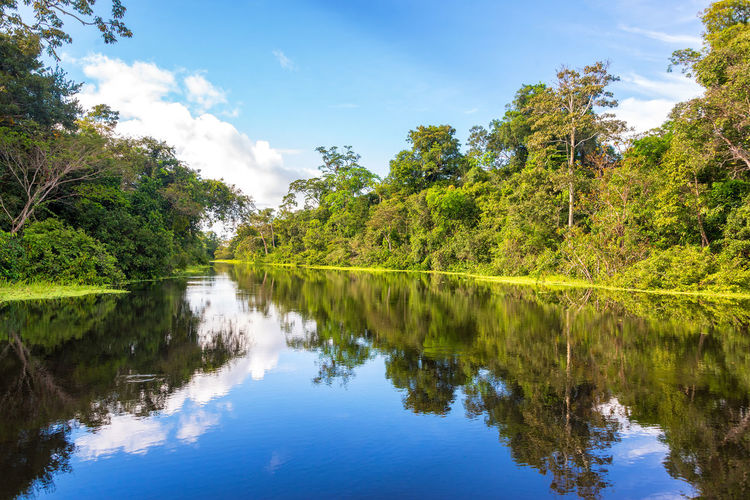 Amazon rain forest perfectly reflected in a small river near Iquitos, Peru Amazon Amazonia Background Flood Flooded Forest Green Holiday Hut Iquitos  Iquitos, Perú Jungle Lake Lodge Nature Park Peru Rainforest Reflection River Travel Tree Tropical Vacation Water