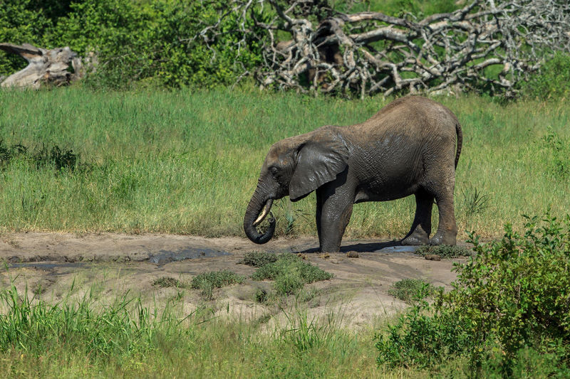 Elephant standing in forest